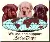 orlando florida lab breeder
